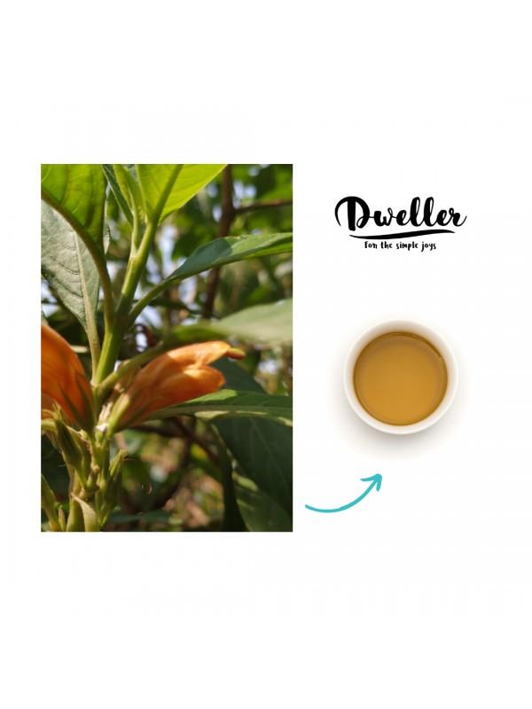 Dweller Nong-mang-kha Ginger Green Tea 18 Tea Bags